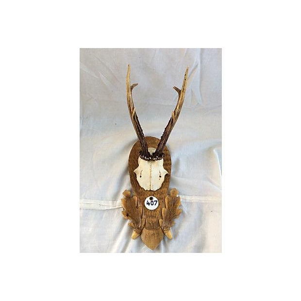Black Forest Deer Horn Trophy Mount - Image 2 of 5