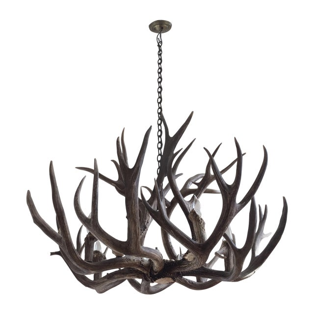 Image of White Tail Deer Antler Chandelier