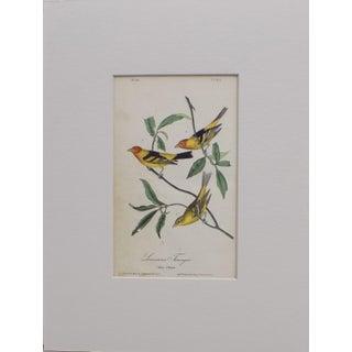 Audubon Louisiana Tanager Lithograph, 1840