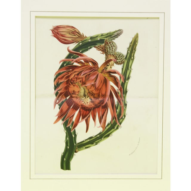 Hand-Glazed Coral Cactus Print - Image 1 of 2