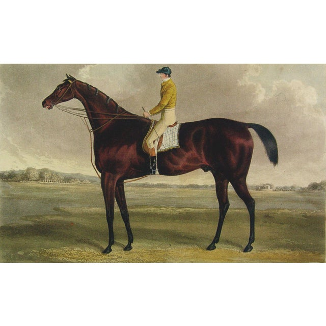 Racehorse Portrait Etching, 1822 - Image 1 of 4