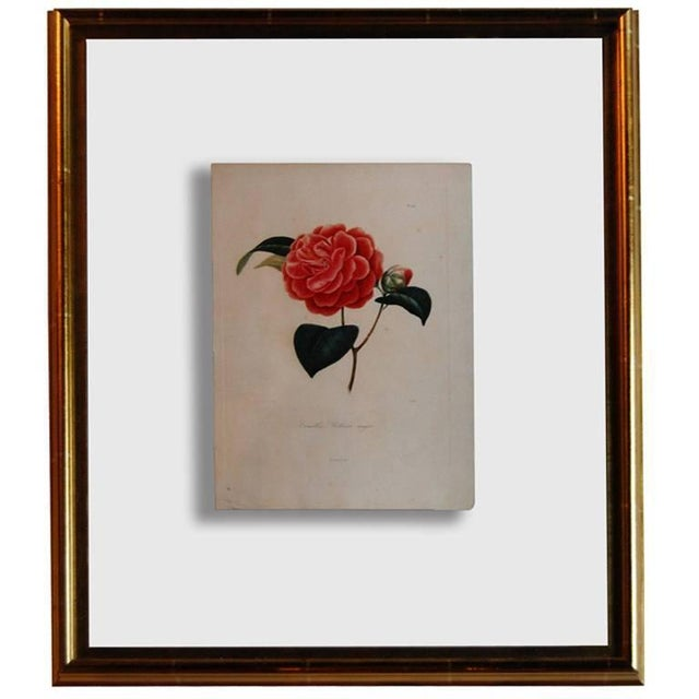 Four J.J. Jung Camellias Pressed Between Glass - Image 9 of 9