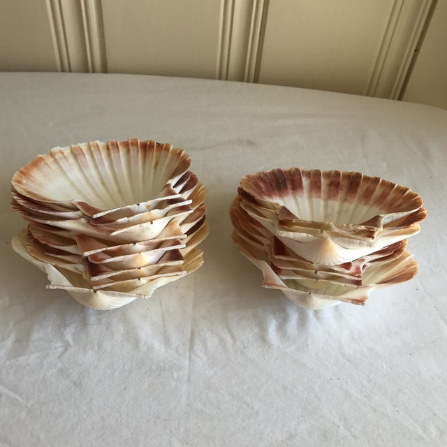 Image of Natural Sea Shells - Set of 15