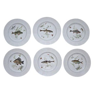 Antique English Fish Pattern Dinner Plates - Set of 6