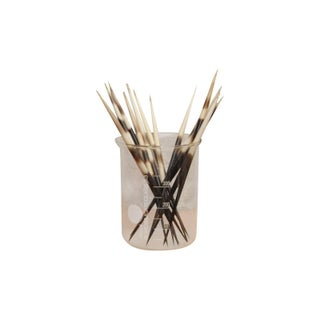 Collection of Thick Porcupine Quills - Set of 12