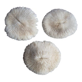 Nautical Mushroom Corals - Set of 3