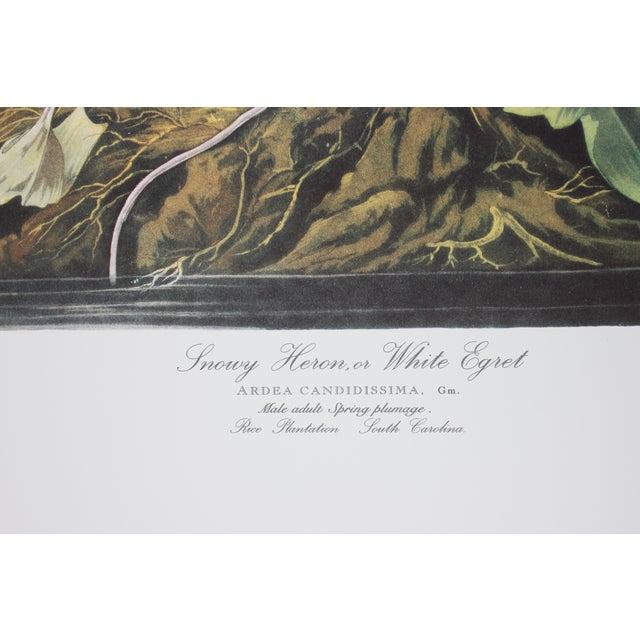 J. J. Audubon Snowy Heron Print - Image 3 of 4