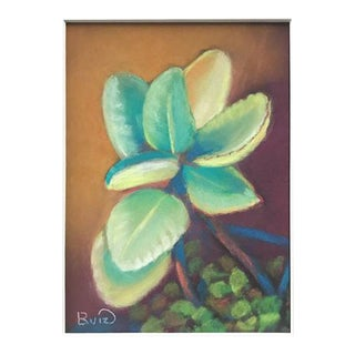 Succulent Pastel Drawing