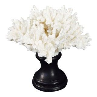 Large Coral Specimen on Wood Base