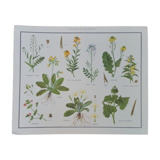 Vintage English Botanical Poster