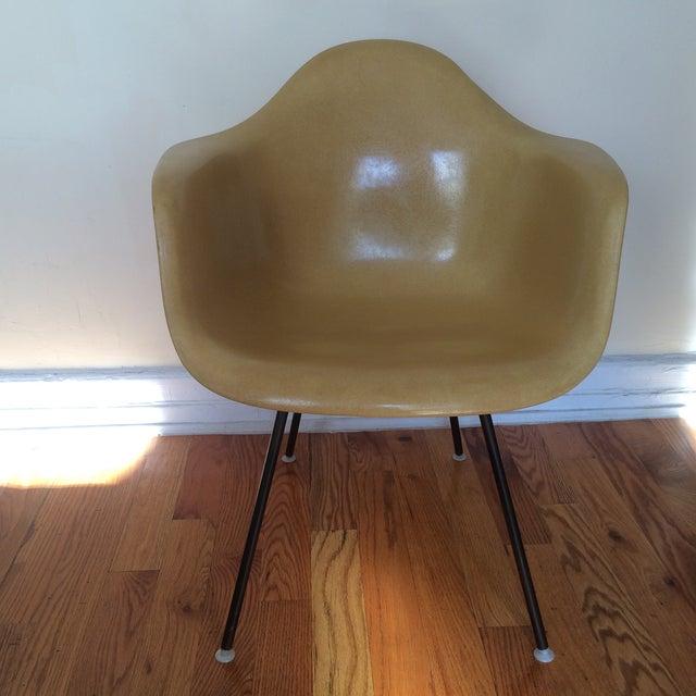 Vintage Herman Miller Eames Fiberglass Armchair - Image 2 of 8