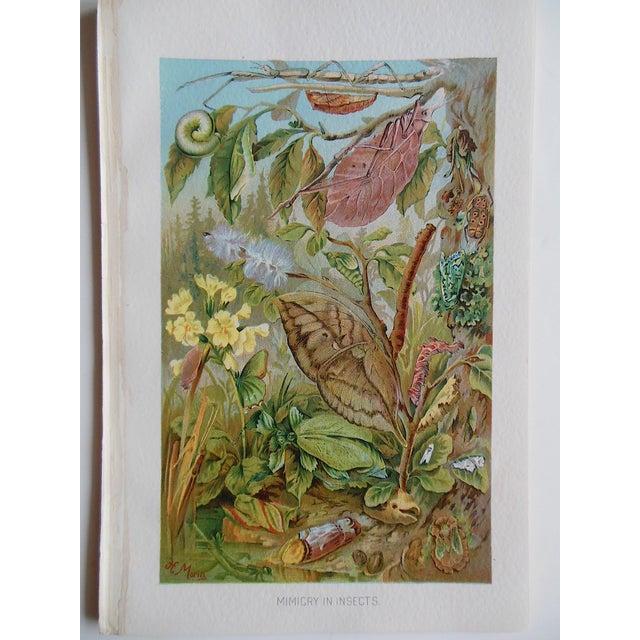 Image of Antique Botanical Creature Lithograph