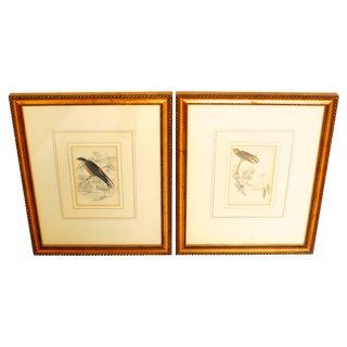 Lizars Natural History Engravings - A Pair