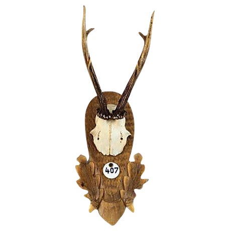Black Forest Deer Horn Trophy Mount - Image 1 of 5