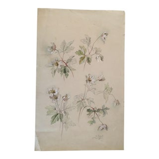 Original Antique Botanical Drawing or Study of White Anemone Flowers in Pencil and Watercolor