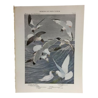 Vintage Birds of New York Gulls Print