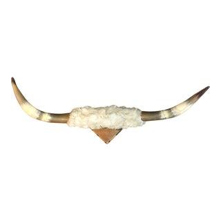 Vintage Longhorn Mounted Steer Horns