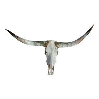 Texas Longhorn & Skull