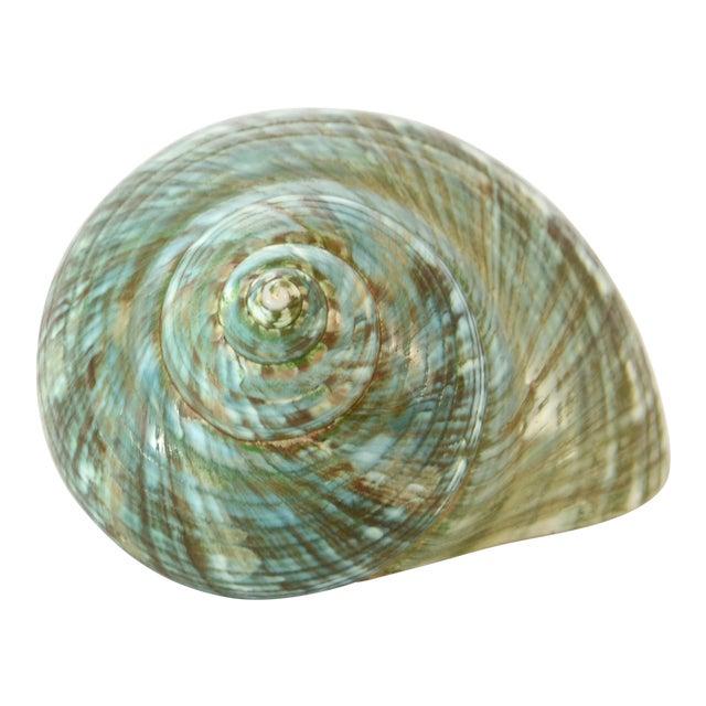 Image of Aqua-Green Turbo Shell