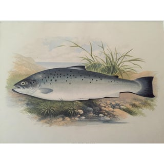 "1879 Antique ""Trout"" Fish Lithograph"