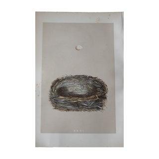 "1875 ""XXXI"" Birds Nest Engraving"