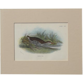 "1890 ""Water Rail"" Original Chromolithograph"