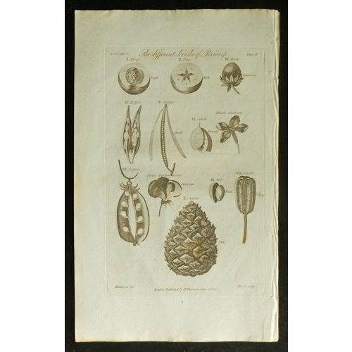 1812 Antique British Flora Pericorp Print - Image 2 of 3