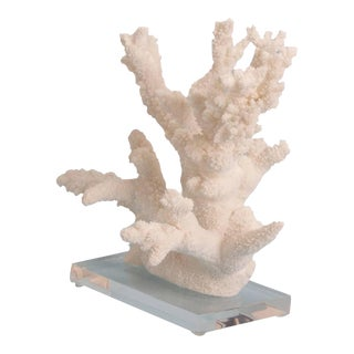 Naturally Abstract Branch Coral Sculpture