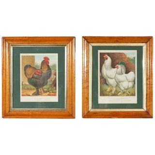 Antique Prints of Prizer Wining Chicken - A Pair