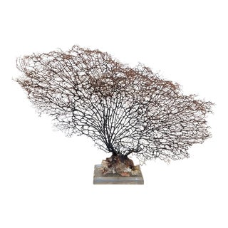 Vintage Sea Fan Mounted on Lucite Base