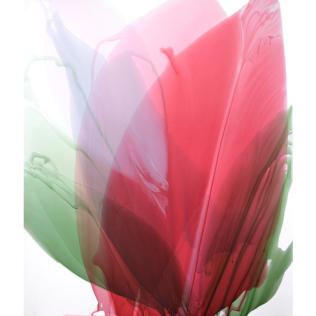 Limited Edition Print - Red Amaryllis - Image 2 of 3