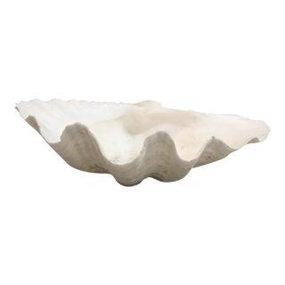 Natural Clam Shell Half