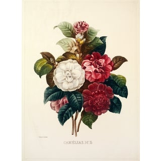 Camellas, Flower Bouquet by Redoute