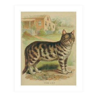 Vintage 'The Cat' Archival Print