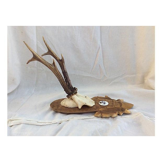 Black Forest Deer Horn Trophy Mount - Image 4 of 5