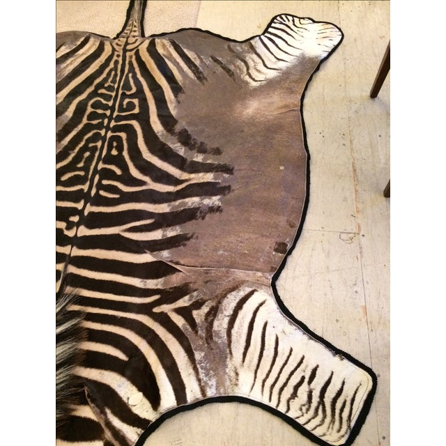 Authentic Zebra Hide Rug 5 9 Quot X 8 9 Quot Chairish