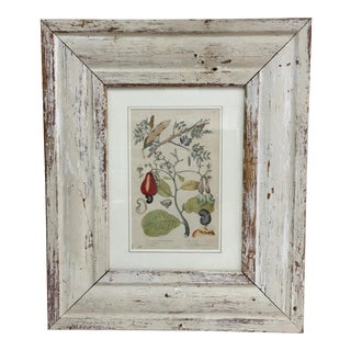 Antique Hand Colored Bean Engraving