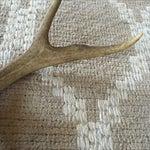 Image of 5 Point Deer Antler