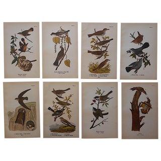 Antique American Bird Lithographs - Set of 8
