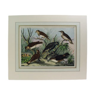 Group of Birds Hand Colored Lithograph Circa 1890s