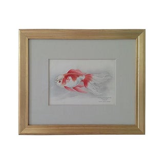 Antique Framed Fish Lithograph