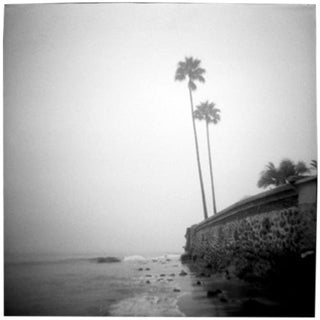 """Twin Palms"" Black & White Vintage Film Camera Photograph"