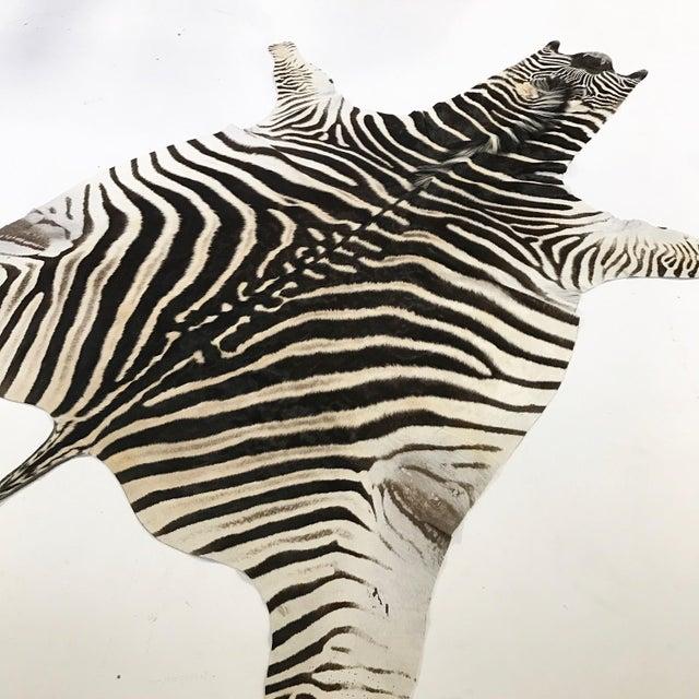 Zebra Hide Rug - 5′9″ × 7′4″ - Image 4 of 4