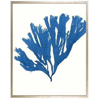 """Azure Seaweed #2"" Framed Print"
