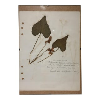 Vintage Blue Violet Botanical Journal Page