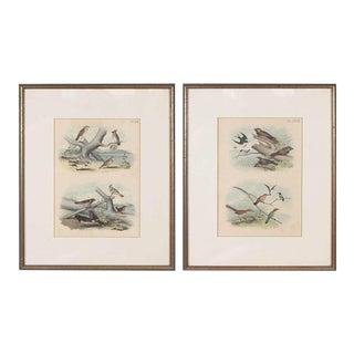 Framed Bird Prints - A Pair