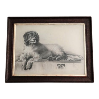 Antique Newfoundland Dog Sketch, after Edwin Landseer