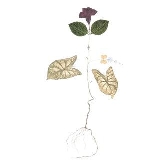 "Marilla Palmer ""Mandeville Oak"""
