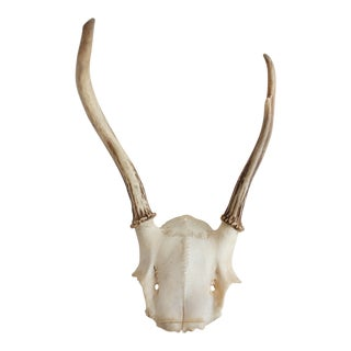 Antlers With Skull