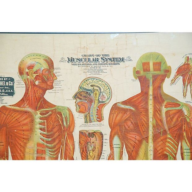 Framed Antique Medical Chart - Image 2 of 6